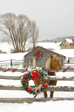 Horse on Soward Ranch Decorated for the Holidays Antelope Valley Creede Colorado by Design Pics Inc