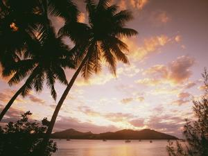 Palm Trees on Tropical Beach at Sunset, Nanuya Lai Lai by Design Pics Inc