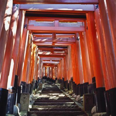 Red Torii Arches over Steps at Inari Temple by Design Pics Inc