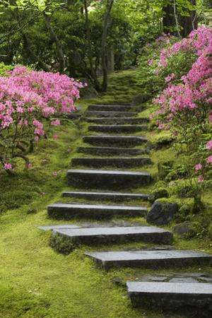 Rock Stairway Along a Moss Covered Hill with Flowering Bushes, Portland by Design Pics Inc