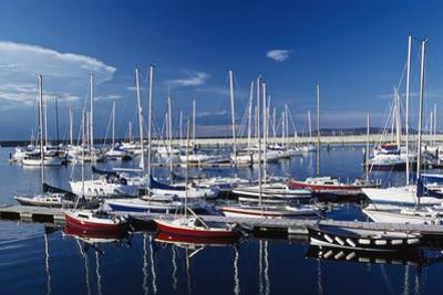 Sailboats Moored in Harbor Marina by Design Pics Inc