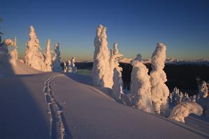Scenic Sunrise in Winter with Ski Tracks in the Foreground, Wrangell Island, Southeast Alaska by Design Pics Inc