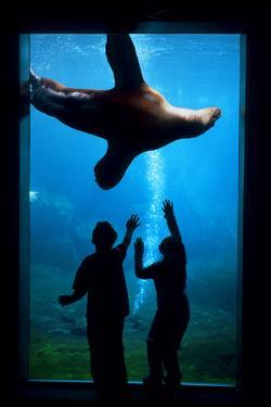 Silhouette of Children Watching a Sea Lion in the Seward Sealife Center in Seward, Alaska by Design Pics Inc
