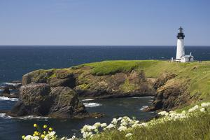 White Lighthouse on the Ocean with Blue Sky and Wildflowers, Newport, Oregon by Design Pics Inc