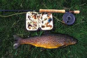 Wild Brown Trout and Fishing Rod by Design Pics Inc