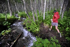Woman Jogging Through a Birch Forest Alongside a Small Stream, Alaska by Design Pics Inc