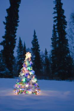 Lit Christmas Tree In Snow Outside During Winter At Twilight In Fairbanks, Alaska by Design Pics
