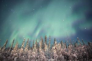 Northern Lights, Dempster Highway, Yukon by Design Pics