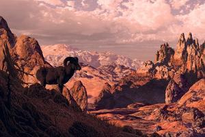 Bighorn Sheep by Designwest