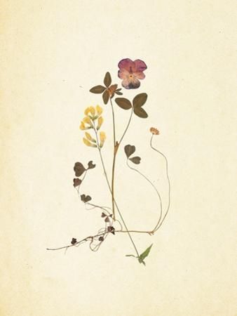 French Herbarium 1 by Devon Ross