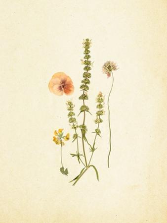 French Herbarium 4 by Devon Ross