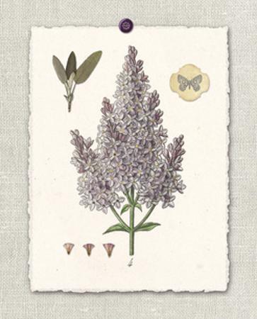 Paris Flea Market Lilacs by Devon Ross