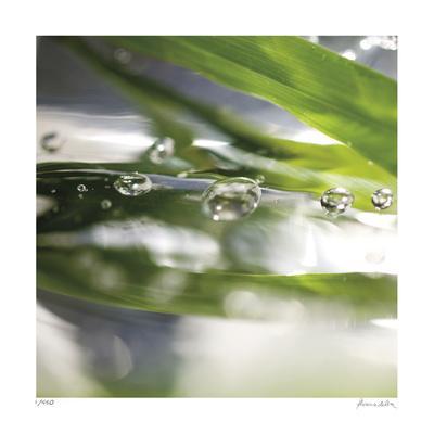 https://imgc.allpostersimages.com/img/posters/dew-drops-3_u-L-F5KK5R0.jpg?artPerspective=n