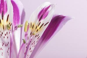 Macro Shot Flower Blossom by Deyan Georgiev