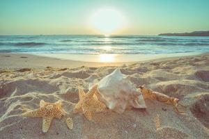Starfish and Shells on the Beach at Sunrise by Deyan Georgiev