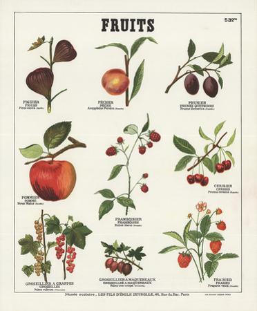 Fruits I by Deyrolle