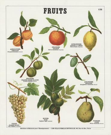 Fruits II by Deyrolle