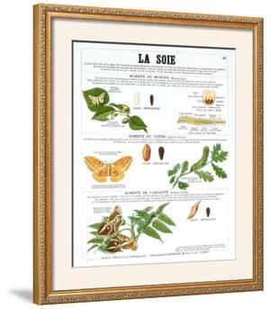 Silk Teaching Chart by Deyrolle
