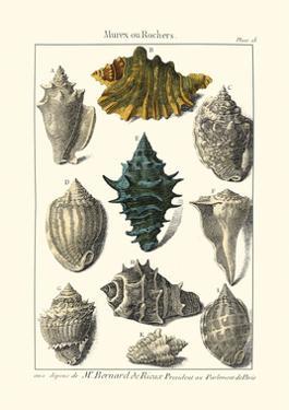 Seaside Treasures II by Dezallier