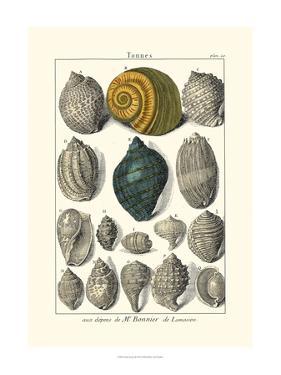 Seaside Treasures III by Dezallier