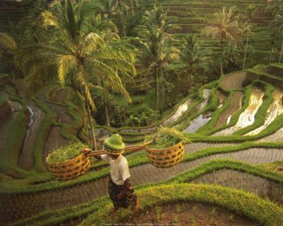 Riziere-Bali by Diagentur