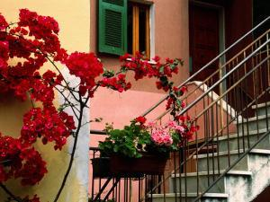 Flowers and Painted Houses in Town in Cinque Terre, Manarola, Liguria, Italy by Diana Mayfield