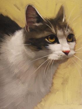 Derby Cat by Diane Hoeptner