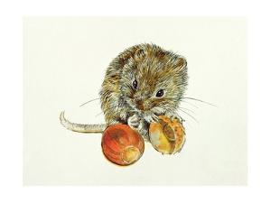 Vole with an Acorn by Diane Matthes