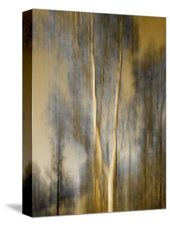 Composited Image of Trees by Diane Miller