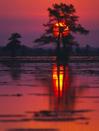 Cypress Swamp at Sunrise, Texas, USA