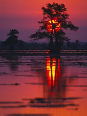 Cypress Swamp at Sunrise, Texas, USA by Diane Miller