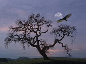 Oak Tree Silhouetted Against Cloudy Sunrise with Partially Obscured Moon and Flying Vulture by Diane Miller