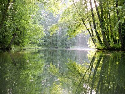 Spreewald Canal Reflection, an Area of Old Canals in Woods