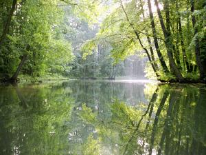 Spreewald Canal Reflection, an Area of Old Canals in Woods by Diane Miller