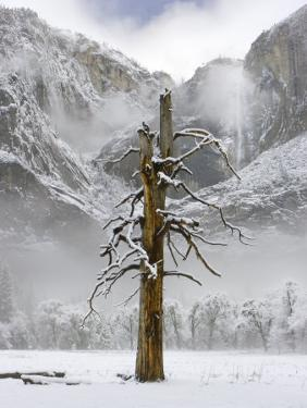 Yosemite Falls, Yosemite National Park, California by Diane Miller