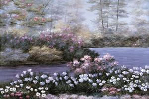 Still Waters by Diane Romanello