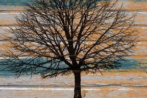 Day Tree by Diane Stimson