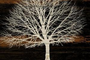 Night Tree by Diane Stimson
