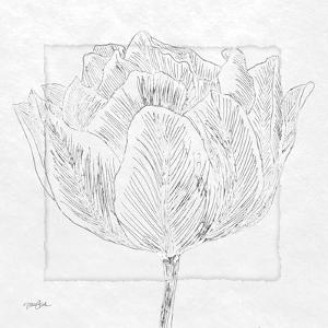 Tulipa 1 by Diane Stimson
