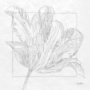 Tulipa 2 by Diane Stimson