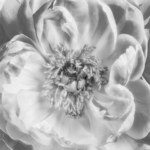 Blooming Intellect 3 by Dianne Poinski