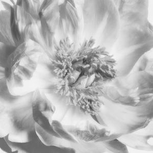 Blooming Intellect 4 by Dianne Poinski