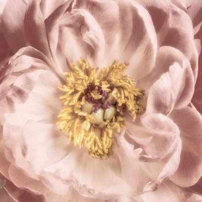 Burgundy Bloom 1