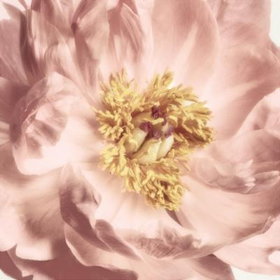 Burgundy Bloom 2