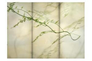 Delicate Light 2 by Dianne Poinski