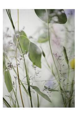 Soft Leaves 2 by Dianne Poinski