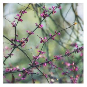 Spring Branches by Dianne Poinski