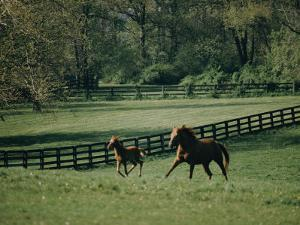 A Horse and its Colt Run Through a Field by Dick Durrance
