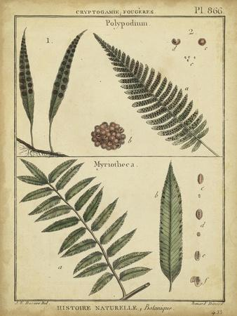 https://imgc.allpostersimages.com/img/posters/diderot-antique-ferns-iii_u-L-PFSGSX0.jpg?artPerspective=n