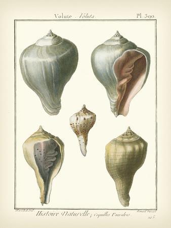 Volute Shells, Pl.390